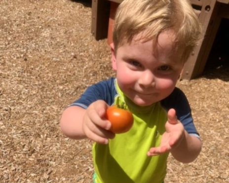 Boy holding a tomato at the Sunshine School